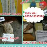 harga paket kambing aqiqah 2016  bekasi timur